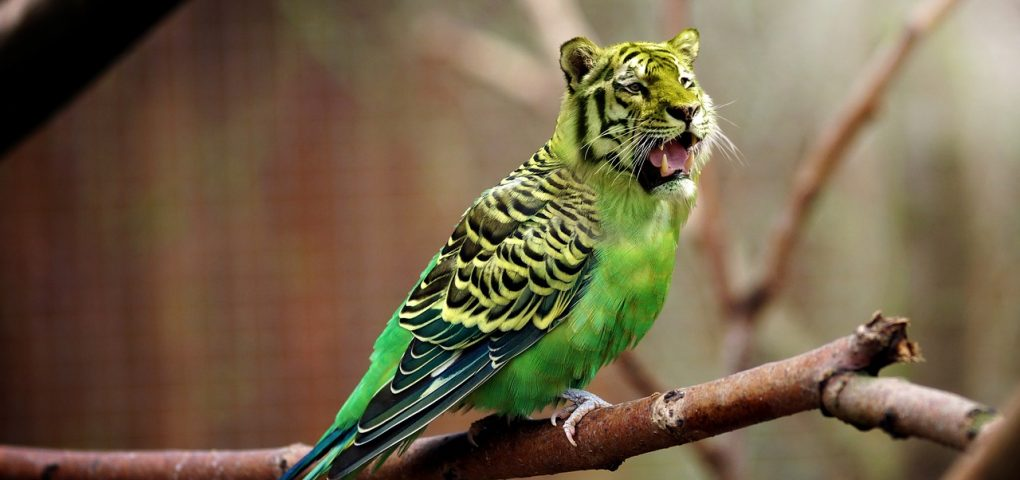 A budgie with a tiger's head