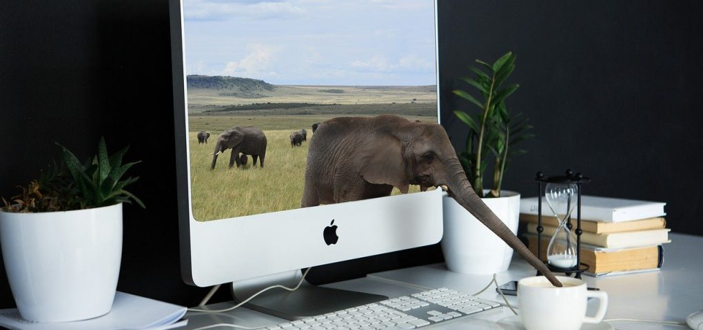 Elephant's trunk reaching out of computer screen to drink from cup of coffee on desk